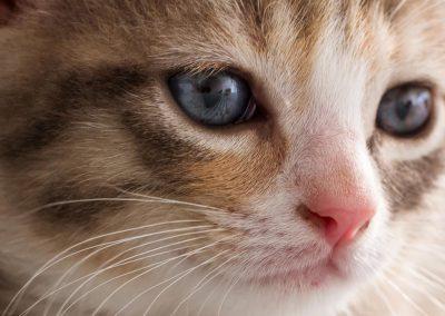 Gros plan de chaton