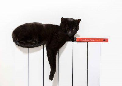 Chat détendu sur un radiateur Ours des Vosges
