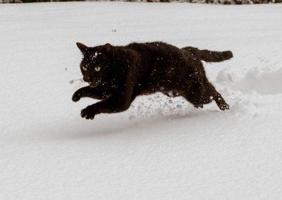 Chat noir courant dans la neige