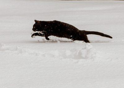 Chat dans la neige Ours des Vosges