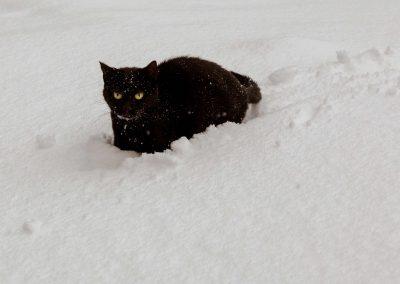 Chat noir dans la neige
