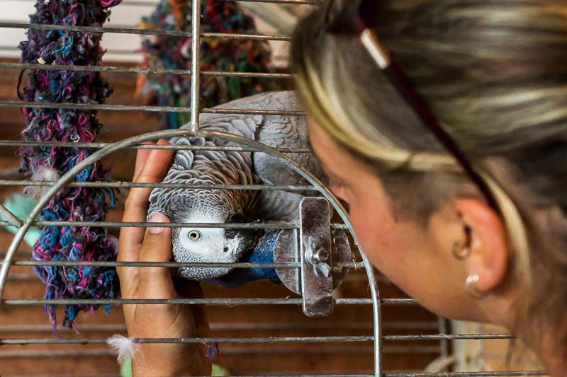 perroquet qui cherche des caresses